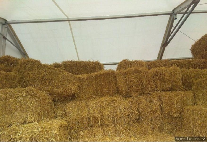 Prodám čerstvou ječmenou (ječnou) a pšeničnou slámu v malých hranatých balících