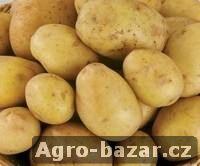 Sadbové brambory prodej